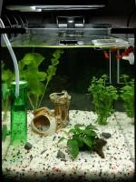 Мой второй аквариум Вариант 2
