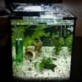 Система охлаждения для аквариума. Часть 1