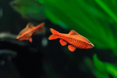 Мои рыбки