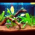Мой третий аквариум дата 2013.03.04