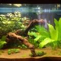 Мой третий аквариум дата 2013.04.18