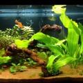 Мой третий аквариум дата 2013.05.06
